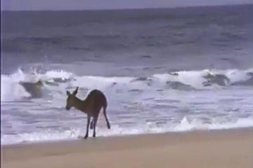 venado y el mar